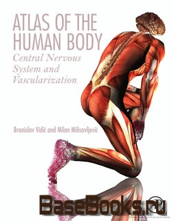 Atlas of the Human Body: Central Nervous System and Vascularization