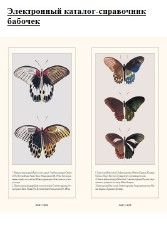 Электронный каталог-справочник бабочек